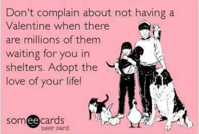 AdoptLove