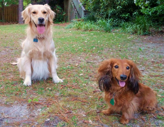 Tonks and Stretch add joy and fur-ever fun to a South Carolina family.